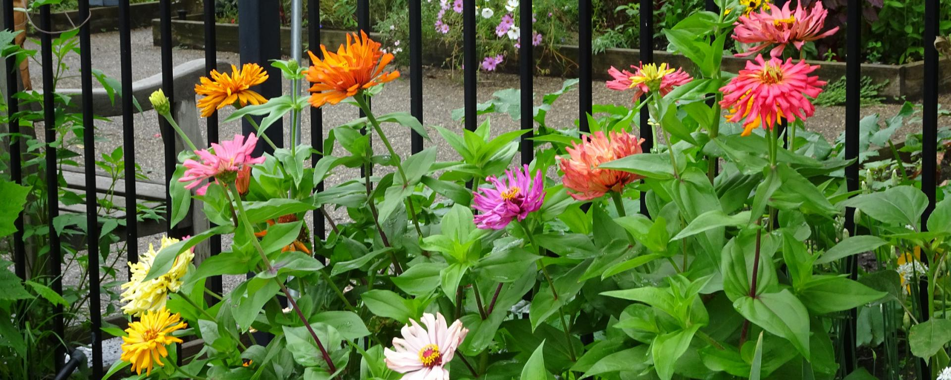 colorful flowers by a fence